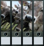 file art Ordner Etiketten - Cows